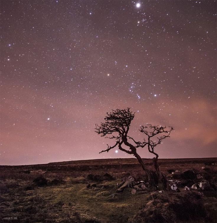 منظره ستارگان و صورت فلکی شعرای یمانی در پس زمینه یک درخت بربادرفته توسط آنا والز