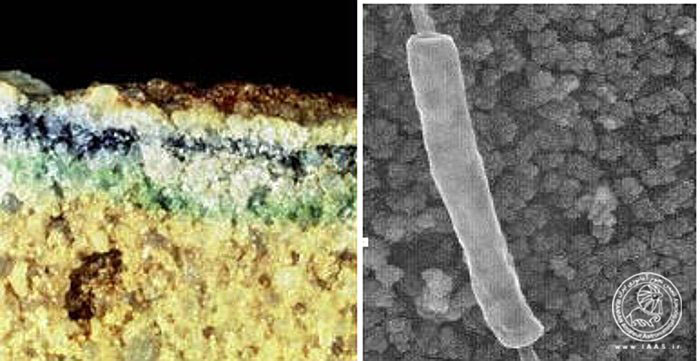 کریپتواندولیثهای زنده (رگههای سبز، سیاه و آبی) در نمونه سنگهای به دست آمده از صحرای قطب جنوب و باکتری میلهای گرما دوست در چشمههای آب گرم پارک ملی یلواستون